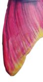 Tail tips en glimmende staart
